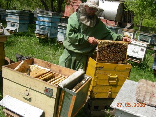 Как в августе сделать отводок пчел 929